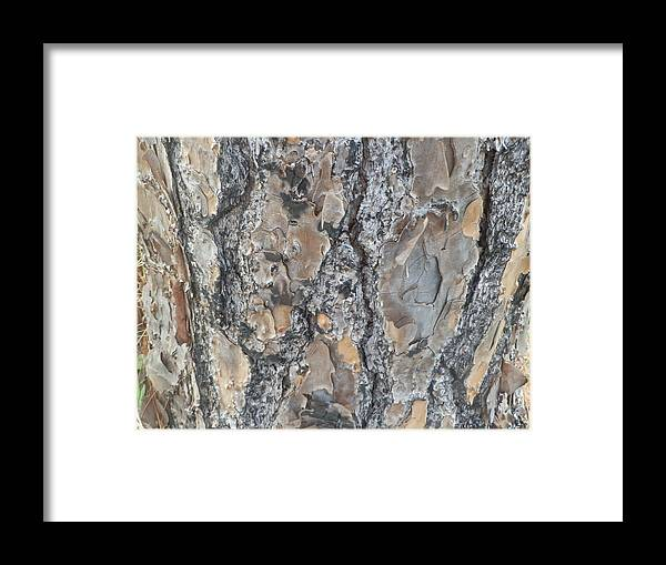 Nature Framed Print featuring the painting Bark Ix by Ione Hedges