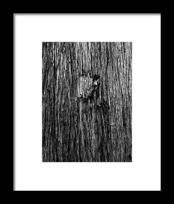 Bark Framed Print featuring the photograph Bark Mark by Jaqui Ares