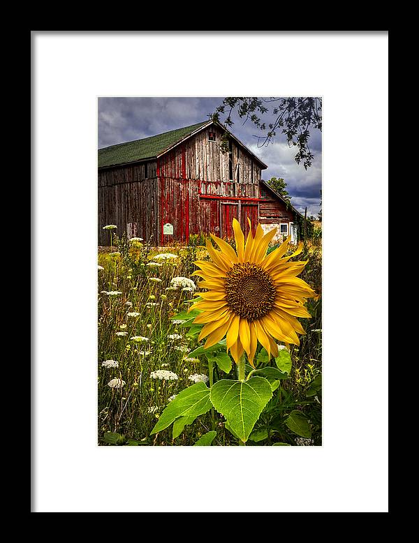 Barn Framed Print featuring the photograph Barn Meadow Flowers by Debra and Dave Vanderlaan