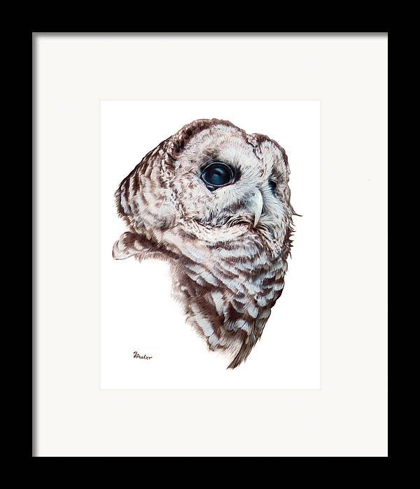 Barred Owl Framed Print featuring the drawing Barred Owl by Brent Ander