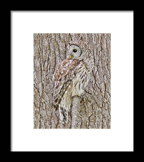 Owl Framed Print featuring the photograph Barred Owl Camouflage by Jennie Marie Schell