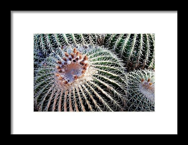 Care Framed Print featuring the photograph Barrel Cacti by Steve@colorado