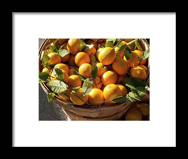 Orange Framed Print featuring the photograph Basket Of Fresh Picked Oranges by Bill Boch