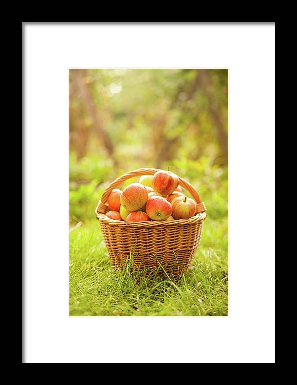 Grass Framed Print featuring the photograph Basket With Apples by Tatyana Tomsickova Photography