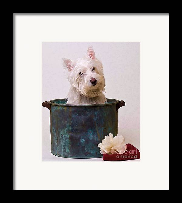 Dog Framed Print featuring the photograph Bath Time Westie by Edward Fielding