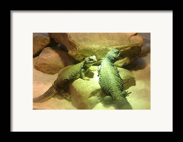 Animal Framed Print featuring the photograph Bathing In Lights by Dervent Wiltshire