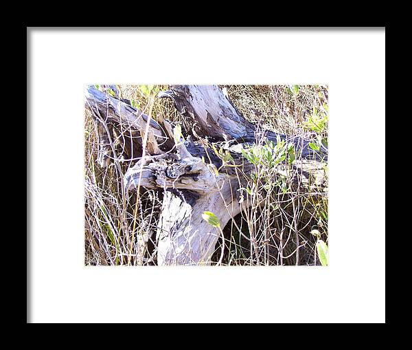 Beach Framed Print featuring the photograph Bayberry And Driftwood by Terry Cobb