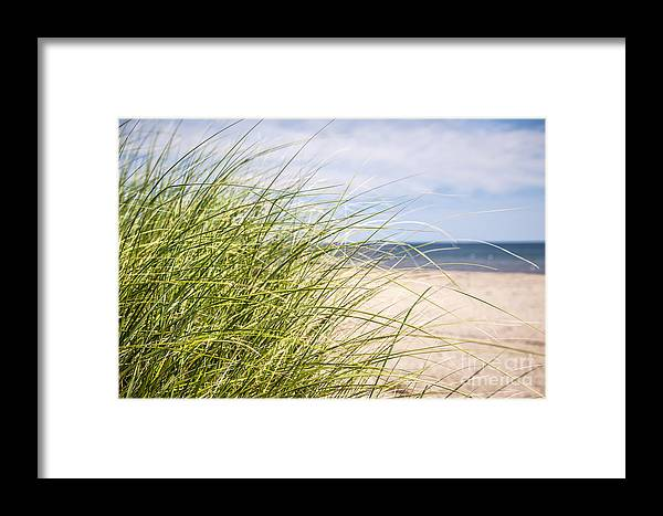 Grass Framed Print featuring the photograph Beach Grass by Elena Elisseeva