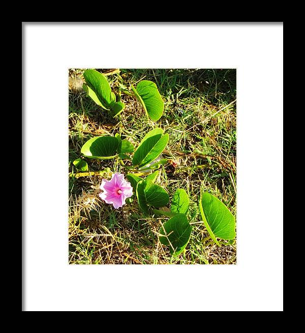 Morning Glory Framed Print featuring the photograph Beach Morning Glory by Craig Wood