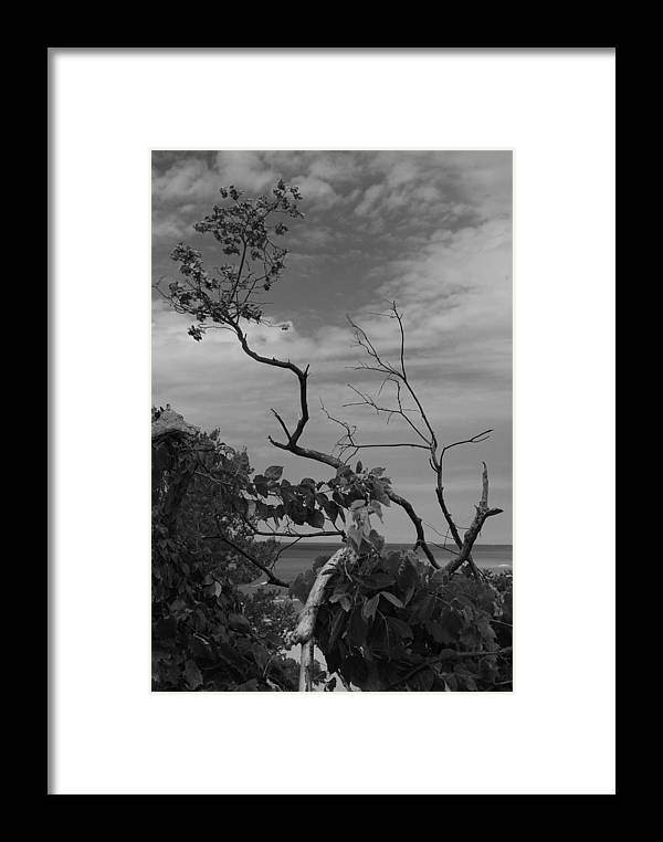 Nature Framed Print featuring the photograph beach tree BW by Tim Brandt