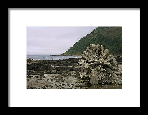 Drift Wood Framed Print featuring the photograph Beached by Ben Zell