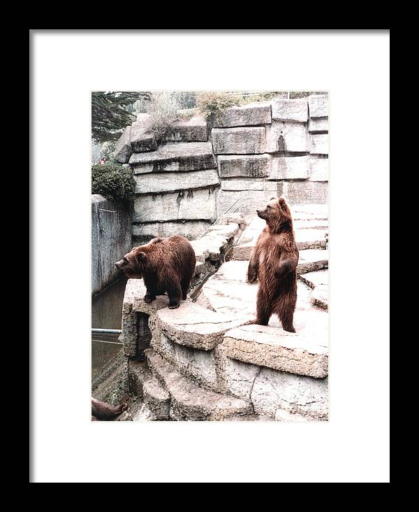 Bears Framed Print featuring the photograph Bears Feeding Time At The Zoo II by Jim Fitzpatrick