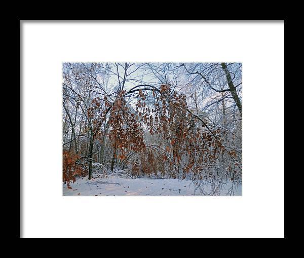 Tree Framed Print featuring the photograph Beaten But Not Broken by Pema Hou