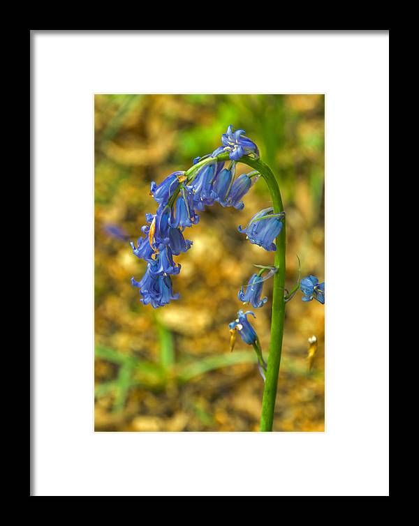 Blue Framed Print featuring the photograph Beautiful Bells by Trevor Kersley