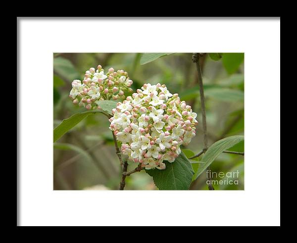 Jaclyn Framed Print featuring the photograph Beautiful Bunch by Jaclyn Hughes Fine Art