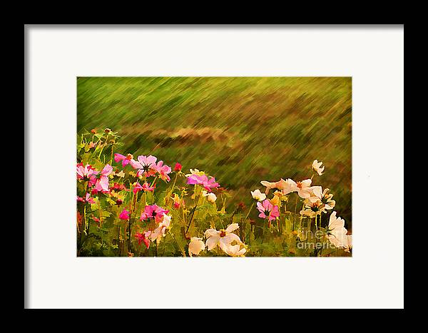 Background Framed Print featuring the photograph Beautiful Cosmos by Darren Fisher