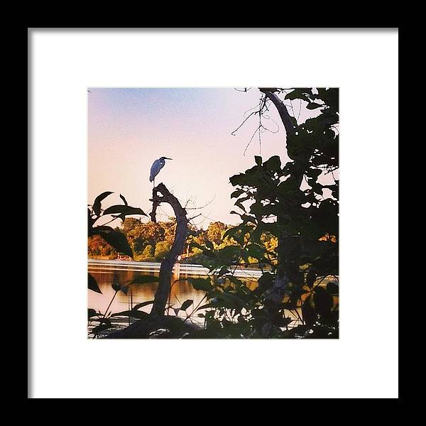 Egret Framed Print featuring the photograph Beautiful Egret Watching The Lake by Betsy Nelson