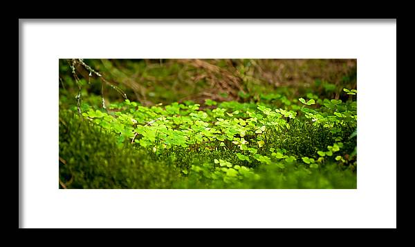 Background Framed Print featuring the photograph Beautiful Lush Green Nature Background by Matthew Gibson