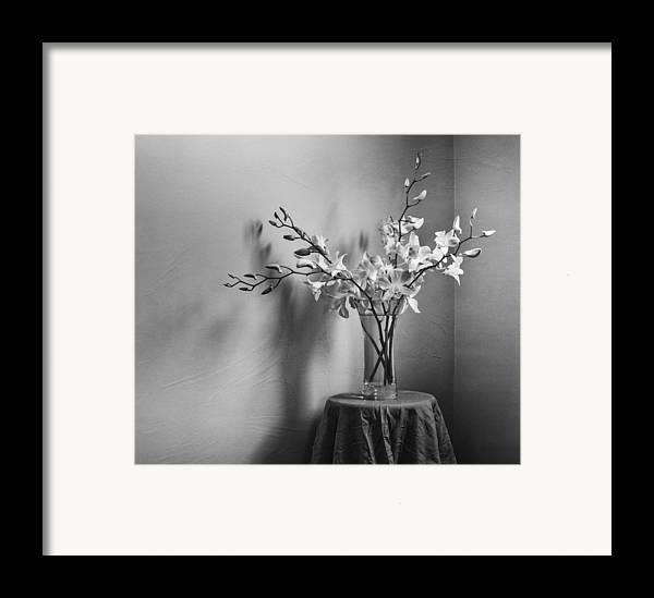 Orchid Framed Print featuring the photograph Beautiful Melancholy by Amy Weiss