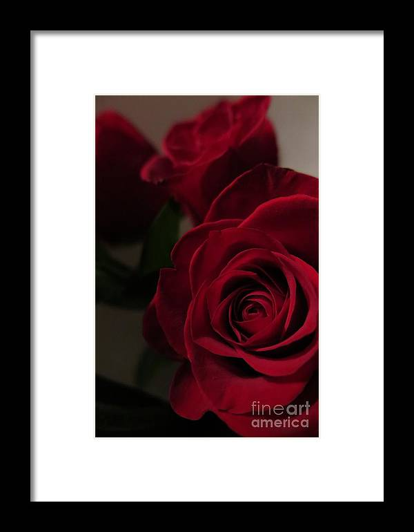 Floral Framed Print featuring the photograph Beautiful Red Roses by Tara Shalton
