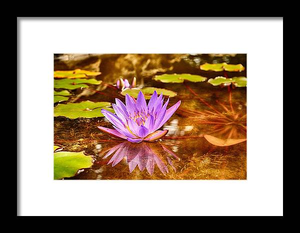Reflection Photograph Framed Print featuring the photograph Beautiful Reflections by Kristina Deane
