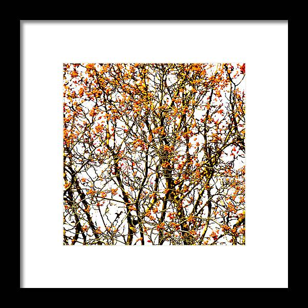 Abstract Framed Print featuring the photograph Beautiful Rowan 10 - Square by Alexander Senin