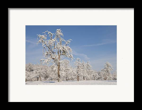 Winter Framed Print featuring the photograph Beautiful Winter Day With Snow Covered Trees And Blue Sky by Matthias Hauser