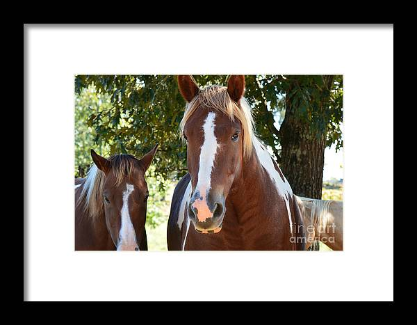 Horses Framed Print featuring the photograph Beauty And Her Best Friend by Barb Dalton