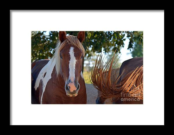 Horses Framed Print featuring the photograph Beauty And The Swish by Barb Dalton