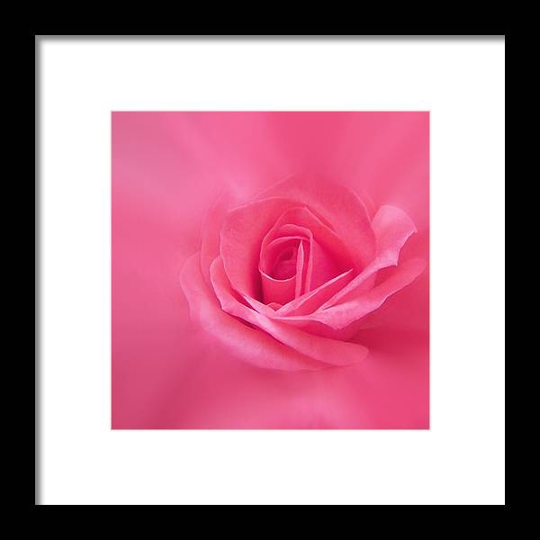 Rose Framed Print featuring the photograph Beauty by Ernie Echols