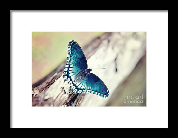 Butterfly Framed Print featuring the photograph Beauty In Blue by Thereasa Gwinn