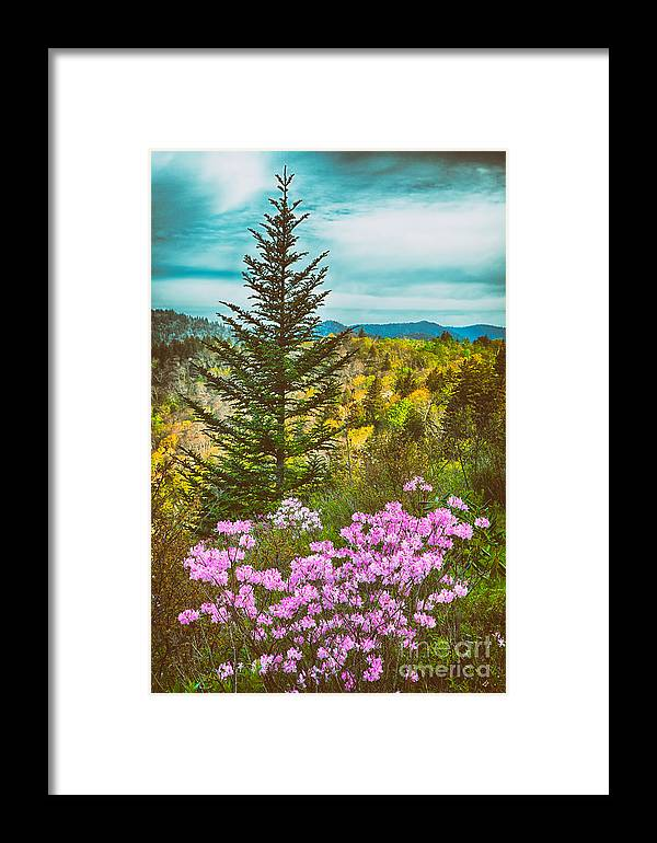 North Carolina Framed Print featuring the painting Beauty In The Forest II by Dan Carmichael