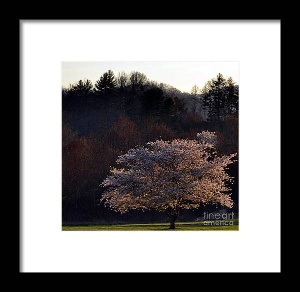 Botanical Framed Print featuring the photograph Beauty Of A Tree by Eva Thomas
