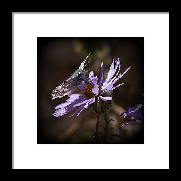 Moths Framed Print featuring the photograph Beauty Of Nature by Ernie Echols