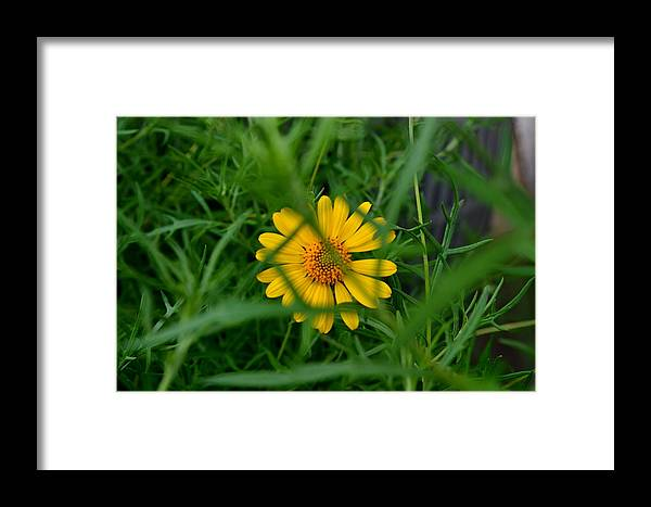 Yellow Framed Print featuring the painting Beauty Within by Pam Mimbela