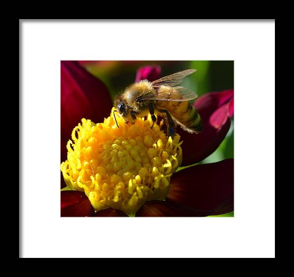 Flower Framed Print featuring the photograph Bee Business by Jeri lyn Chevalier