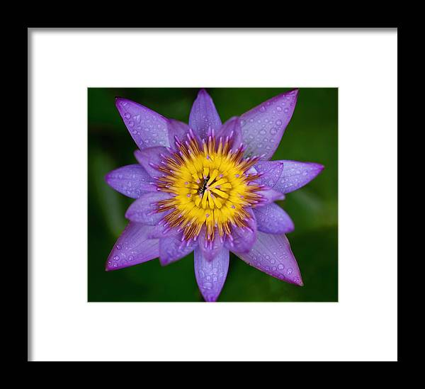 Flower Framed Print featuring the photograph Bee Eating Flower by Christa Paustenbaugh