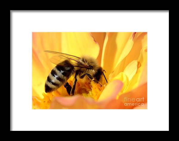 Bee Framed Print featuring the photograph Bee In Flower by Dianne Phelps