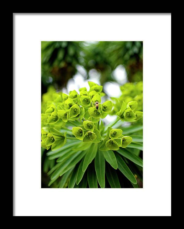Insect Framed Print featuring the photograph Bee Pollenating Flower by Pete Starman