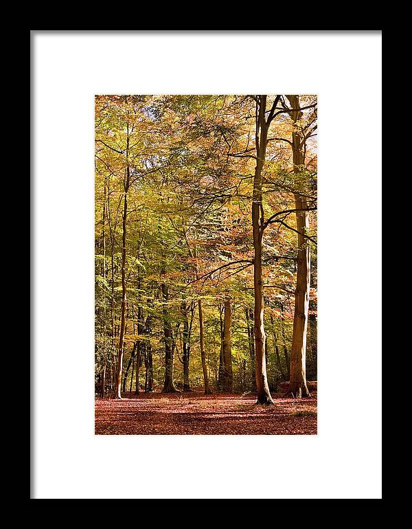 Landscape Framed Print featuring the photograph Beeches by Matthew Gibson