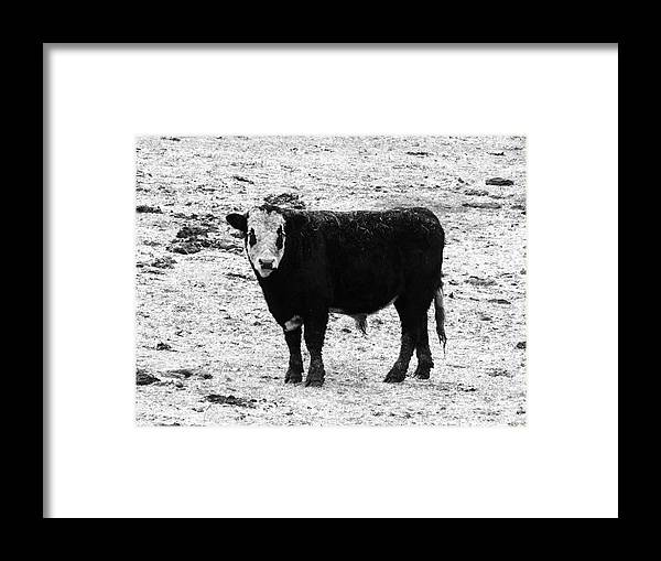 Beef Framed Print featuring the photograph Beef Bandit by J L Zarek