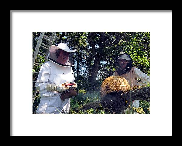 Apis Mellifera Framed Print featuring the photograph Beekeepers Collecting Swarming Honeybees by Simon Fraser/science Photo Library