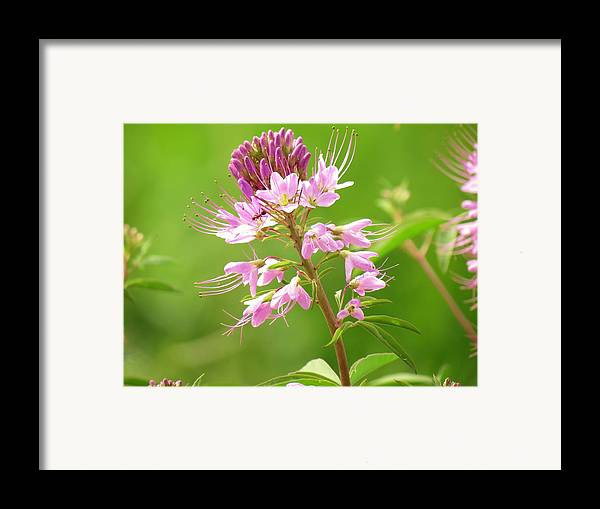 New Mexico Framed Print featuring the photograph Beeweed . . .with Ant by Feva Fotos