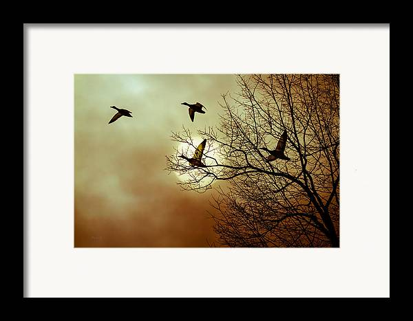 Duck Framed Print featuring the photograph Before A Winter Sky by Bob Orsillo