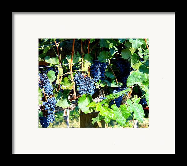 Grapes Framed Print featuring the photograph Before The Harvest by Kay Gilley