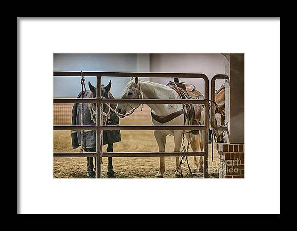 Night Framed Print featuring the photograph Before The Rodeo by Douglas Barnard