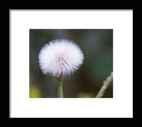 Garden Framed Print featuring the photograph Before The Wind Blows by Paul Wilford