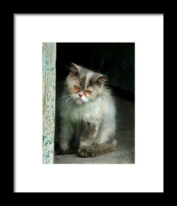 Cat Framed Print featuring the photograph Behemoth by Pavlo Kuzyk