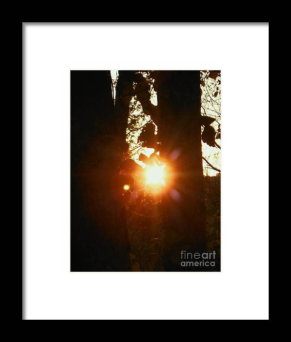 Sun Framed Print featuring the photograph Behind The Trees 2 by Britta Havens