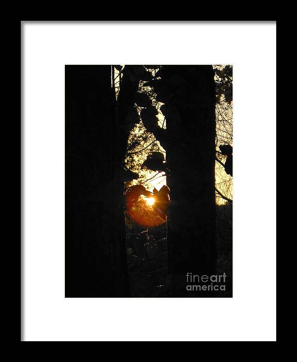 Sun Framed Print featuring the photograph Behind The Trees by Britta Havens